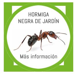 hormiga negra de jardin